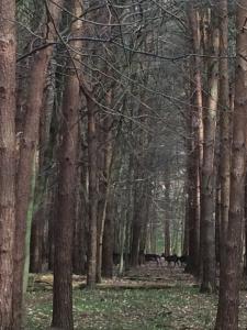 Deer Totem animals