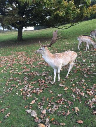 deer - Copy