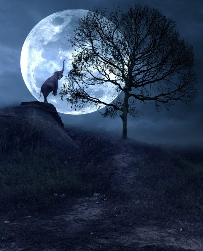 just-elephant-digital-fine-art-photo-manipulation-by-hendra-m-digital-art-elephant-moon-tree
