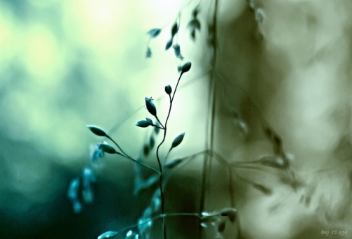t1ggrmysticsamsung-nx1100-csc-mirrorless-nature-outdoors-mystic-plant-dof-soft-softness-green-tones-light-shade-silhouette