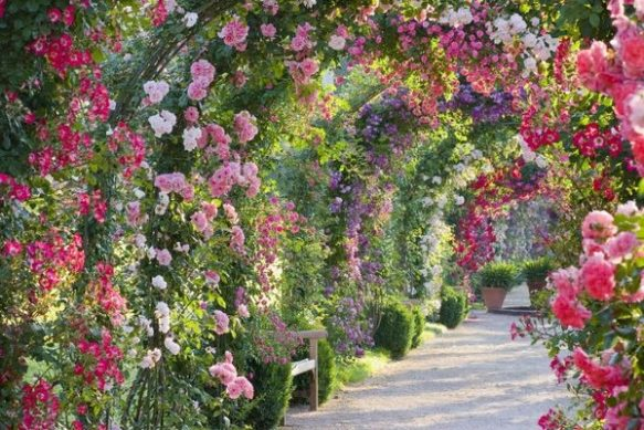 spectacular-rose-gardens-designs-arch-of-roses