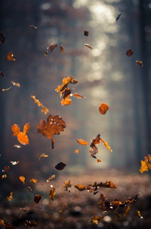 autumn and addiction