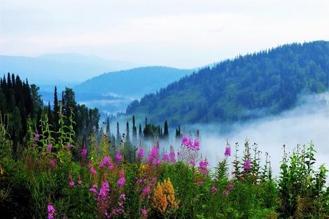 Russia_Siberia_Alatau_Hill_Fog_Shrubs_534957_1280x853